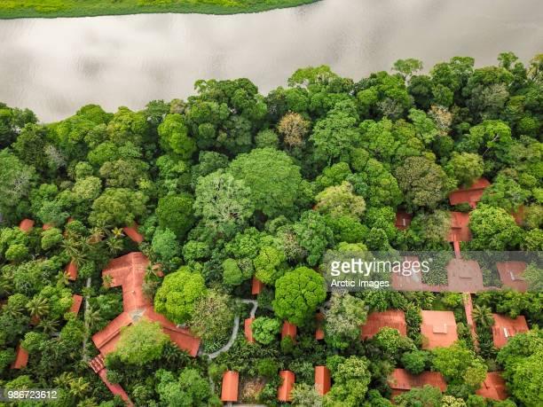 aerial -  trees and roof tops, tortuguero national park, costa rica - klimaschutz stock-fotos und bilder