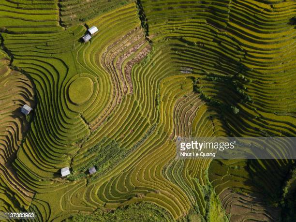 aerial view above of vietnam landscapes with terraces rice field - rice paddy stock pictures, royalty-free photos & images