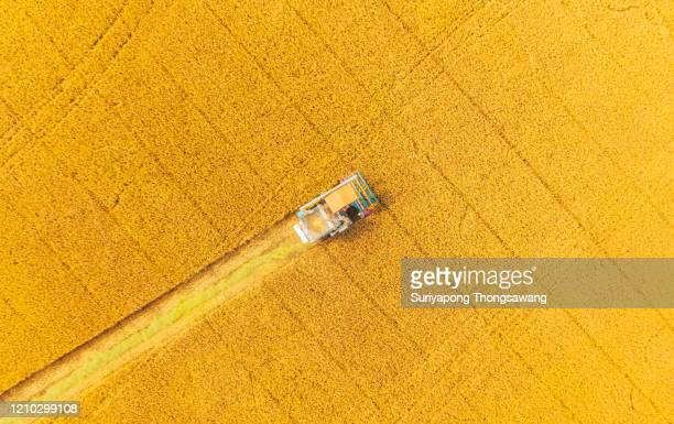 aerial view combine harvester working on the rice field. - yellow stock pictures, royalty-free photos & images