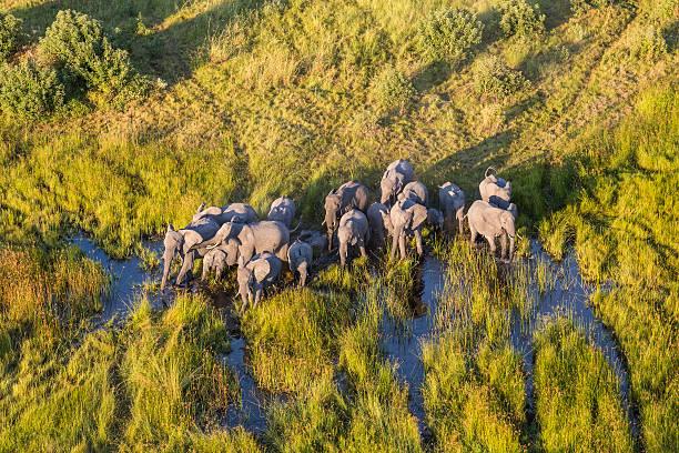 Aerial View Elephants, Okavango Delta, Botswana Wall Art