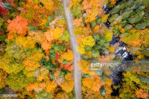 aerial view empty road leading trough beautiful colorful autumn forest in sunny fall - quebec stock pictures, royalty-free photos & images
