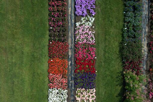 Aerial view experimental flower crops, Hohenheim, Baden-Wuerttemberg, Germany - gettyimageskorea
