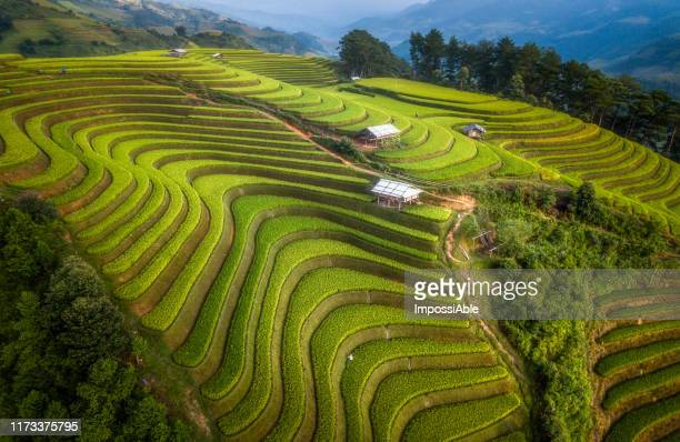 aerial view from drone of beautiful green rice terrace curve on the slope with the mountain landscape view at mu cang chai, vietnam - impossiable stock pictures, royalty-free photos & images