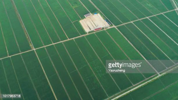 Aerial View - Green Paddy Field from above.Anqing of Anhui province ,China