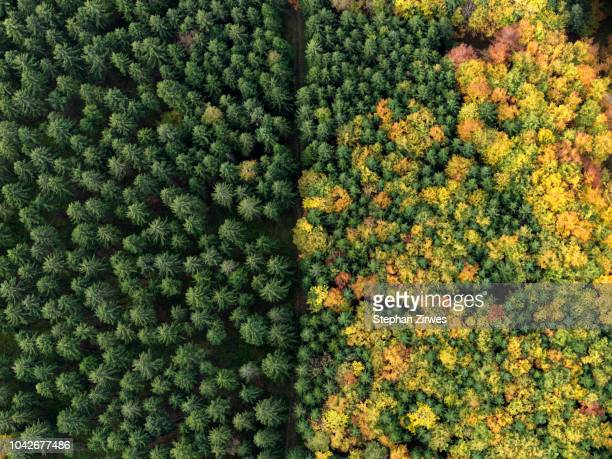 aerial view green treetops turning color in autumn, donaueschingen, baden-wuerttemberg, germany - verandering stockfoto's en -beelden