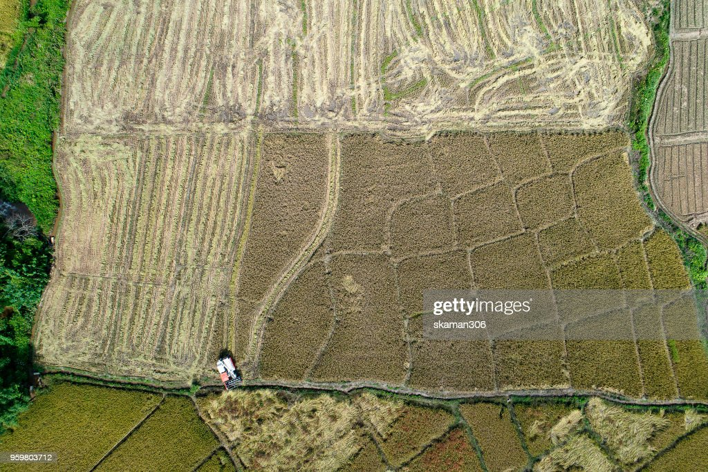 Aerial view harvest season over rice field and village near chiang dao : Stock-Foto