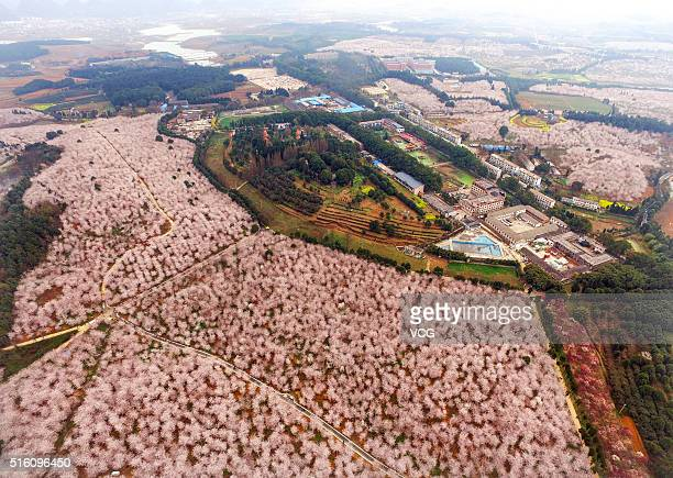 Aerial view image shows cherry blossoms, magnolia flowers and rape flowers form sea of flowers in Hongfeng Lake on March 16, 2016 in Guiyang, Guizhou...