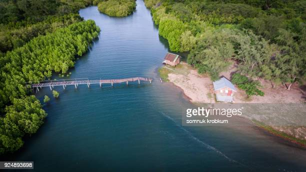 Aerial view mangrove forest  and little hut