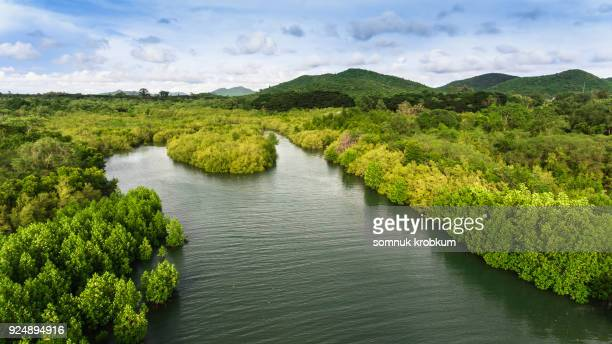 Aerial view mangrove forest