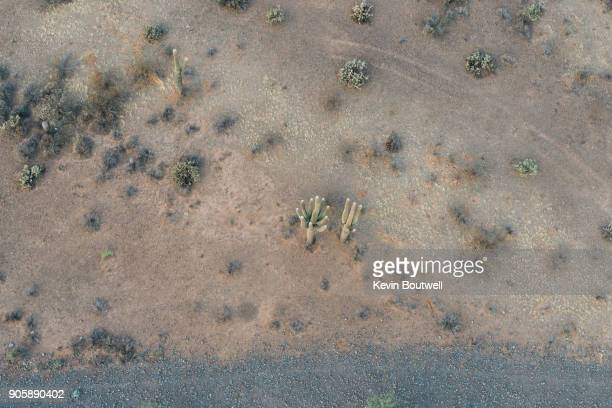 Aerial view of 3 Saguaro Cacti in the desert of North Phoenix from a hot air balloon