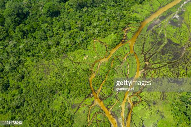 aerial view of a bai (saline, mineral clearing) in the rainforest, congo - democratic republic of the congo stock pictures, royalty-free photos & images