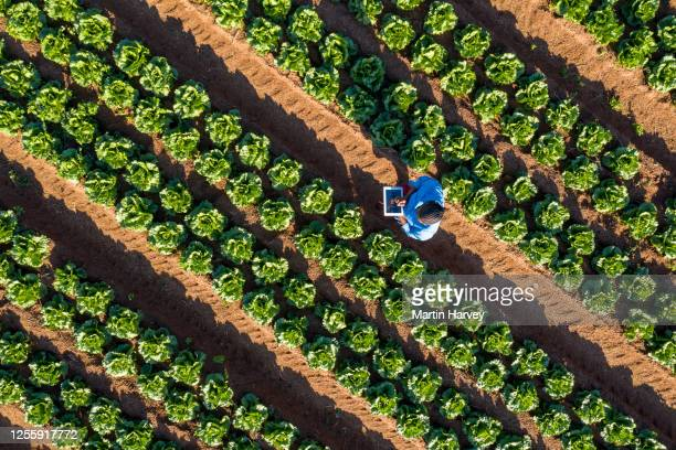 aerial view of a black african female farmer using a digital tablet monitoring vegetables on large scale vegetable farm - agricultural activity stock pictures, royalty-free photos & images