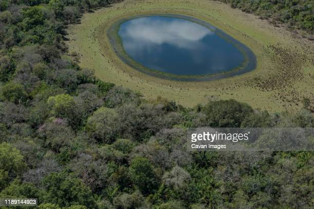 aerial view of a blue lake in brazilian pantanal wetlands - drainage_basin stock pictures, royalty-free photos & images