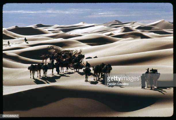 Aerial view of a camel caravan with American actress Debra Winger and camel driver Mohamed Ixa during the shooting of the movie Un The au Sahara or...