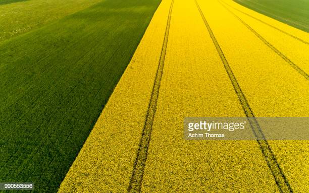 Aerial view of a canola field, Bavaria, Germany, Europe
