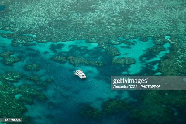 aerial view of a catamaran moored in the great barrier reef in australia - great barrier reef aerial stock pictures, royalty-free photos & images