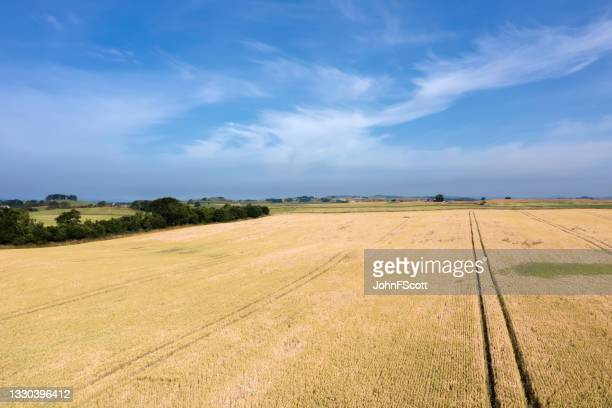 aerial view of a cereal crop in a scottish field - johnfscott stock pictures, royalty-free photos & images