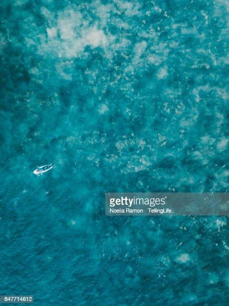 Aerial view of a female surfer on the ocean