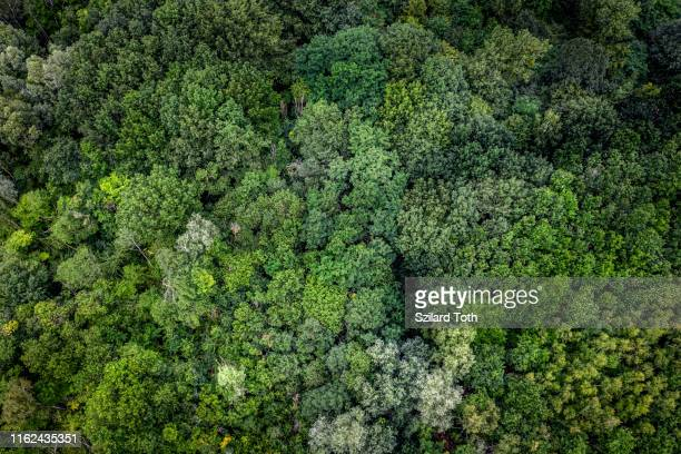 aerial view of a forest in germany - image stock-fotos und bilder
