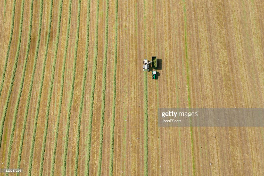 Aerial view of a harvester collecting cut grass : Stock Photo