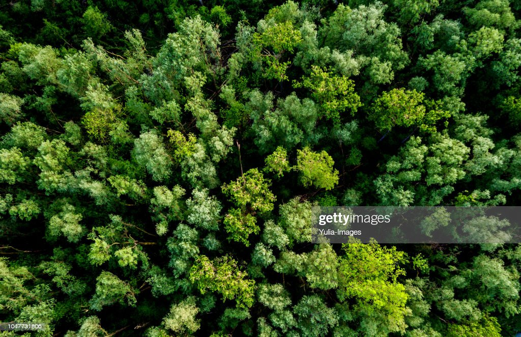 Aerial view of a lush green forest or woodland : Stock Photo