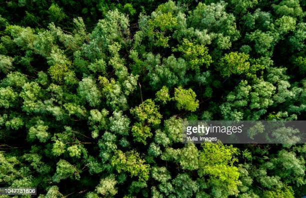 aerial view of a lush green forest or woodland - sopra foto e immagini stock