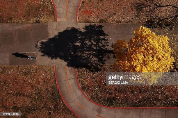 Aerial view of a man walking by a a yellow ipe or lapacho in the central region of Brasilia on September 1, 2020.