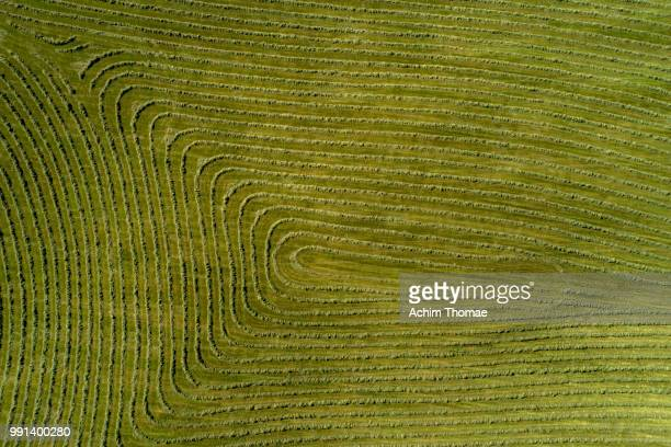 Aerial view of a mowed meadow, Bavaria, Germany, Europe