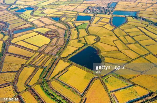 Aerial view of a paddy field during harvest season at Quanjiao County on October 20, 2020 in Chuzhou, Anhui Province of China.