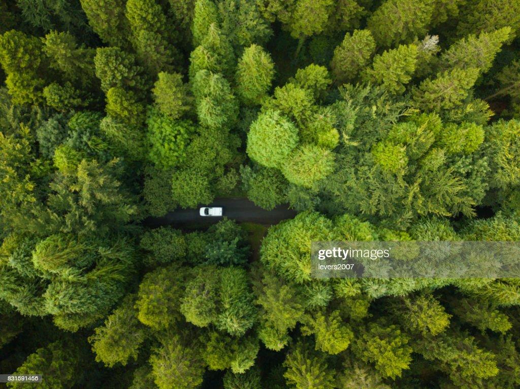 Luftaufnahme von einem Pinienwald mit einem weißen Lieferwagen fahren durch einen Weg, Roscommon, Irland : Stock-Foto