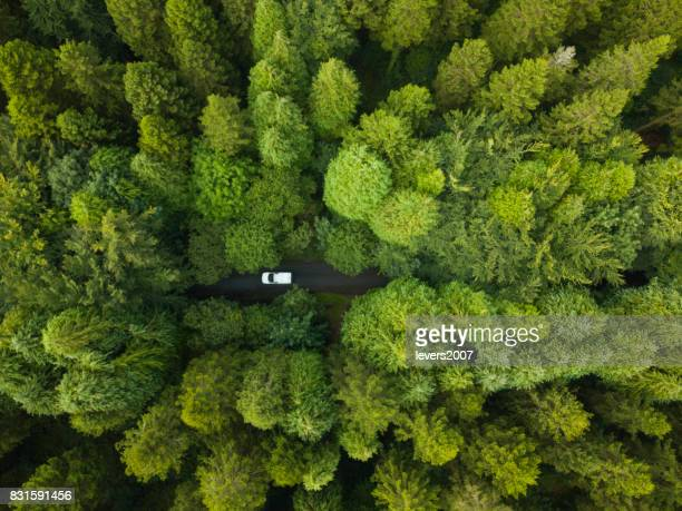 Aerial view of a pine forest with a white van driving through a pathway, Roscommon, Ireland