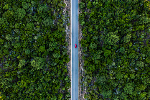 Aerial view of a red car that runs along a road flanked by a green forest. 1042711480