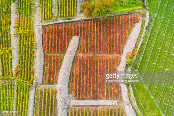 aerial view of a red vineyard in a square border of rock. - italia stockfoto's en -beelden