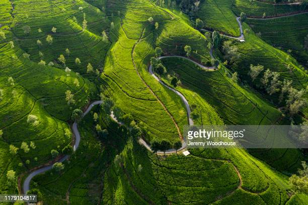 aerial view of a road winding through the edinburgh tea estate - kandy kandy district sri lanka stock pictures, royalty-free photos & images