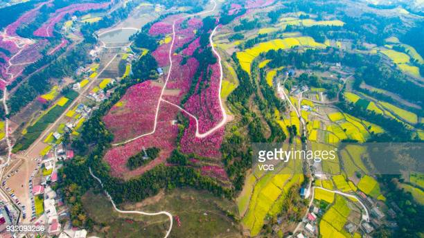 Aerial view of a sea of peach blossoms at Hongquan Village on March 13 2018 in Deyang Sichuan Province of China