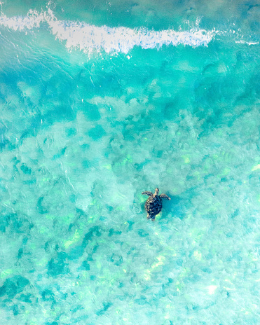 Aerial view of a sea turtle swimming through the blue ocean and wave 1153558988