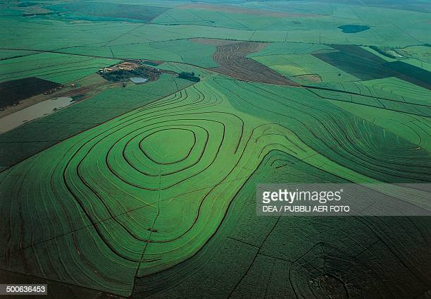 Aerial view of a sugarcane plantation near Assis State of Sao Paulo Brazil