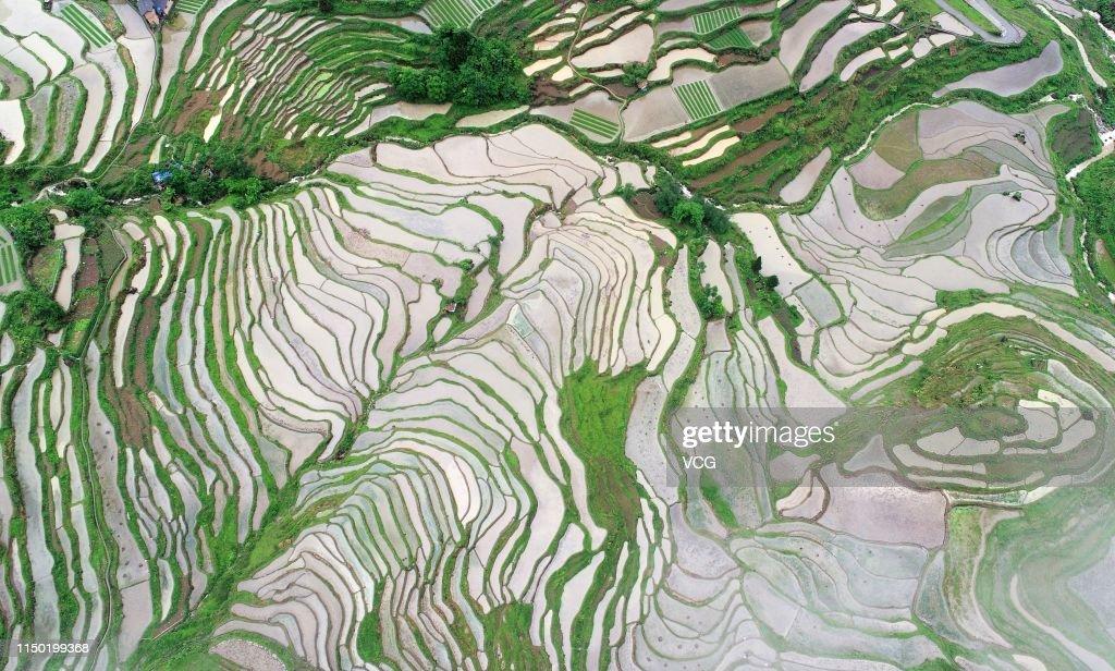 CHN: Terrace Field In Chongqing