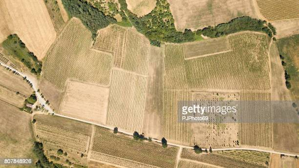 aerial view of a vineyard in piedmont - italy - satellite view stock pictures, royalty-free photos & images