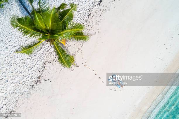 aerial view of a woman relaxing on the beach - escapism stock pictures, royalty-free photos & images