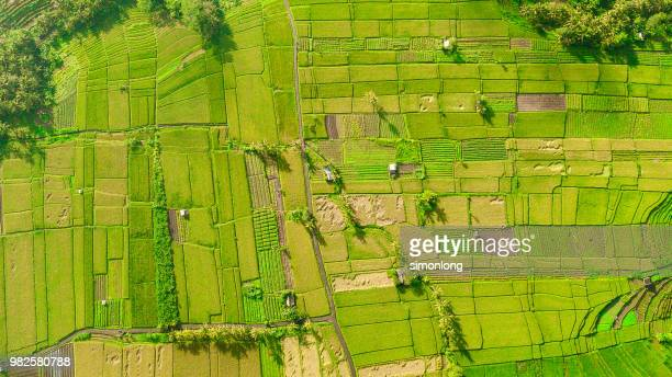 Aerial view of agricultural field in Bali, Indonesia.