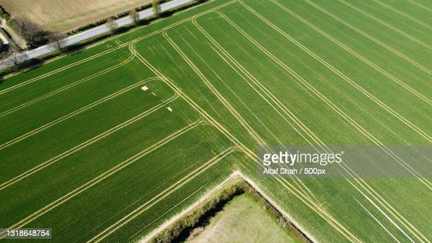 aerial view of agricultural field,luton,united kingdom,uk - crop stock pictures, royalty-free photos & images