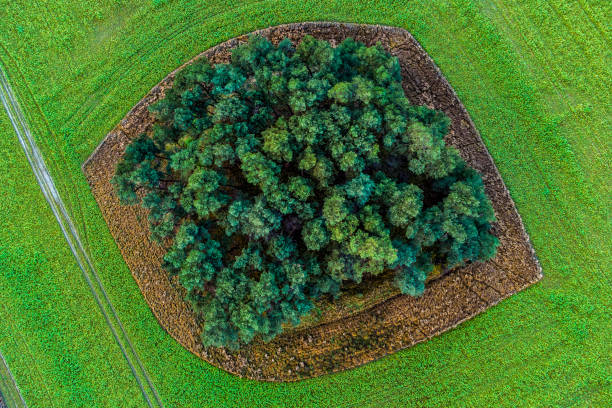 Aerial view of agricultural field,Zum Fichtenvenn,Rheine,Germany