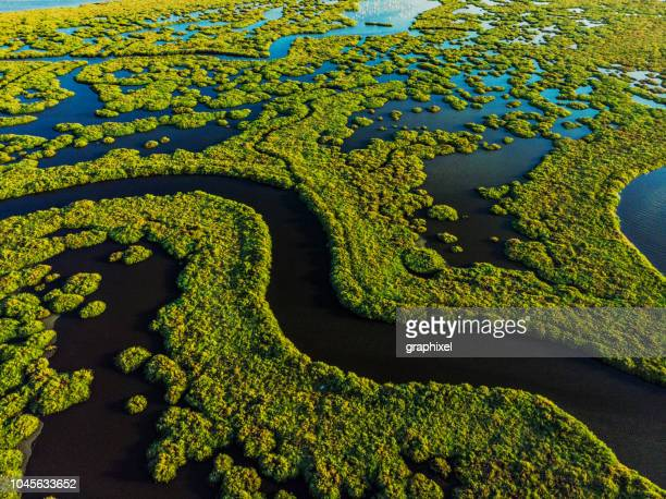 aerial view of amazing natural shapes and textures - marsh stock pictures, royalty-free photos & images