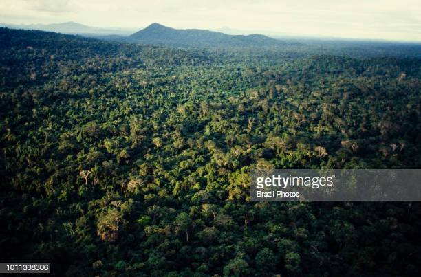 Aerial view of Amazon rain forest dense forest with high biodiversity north Brazil