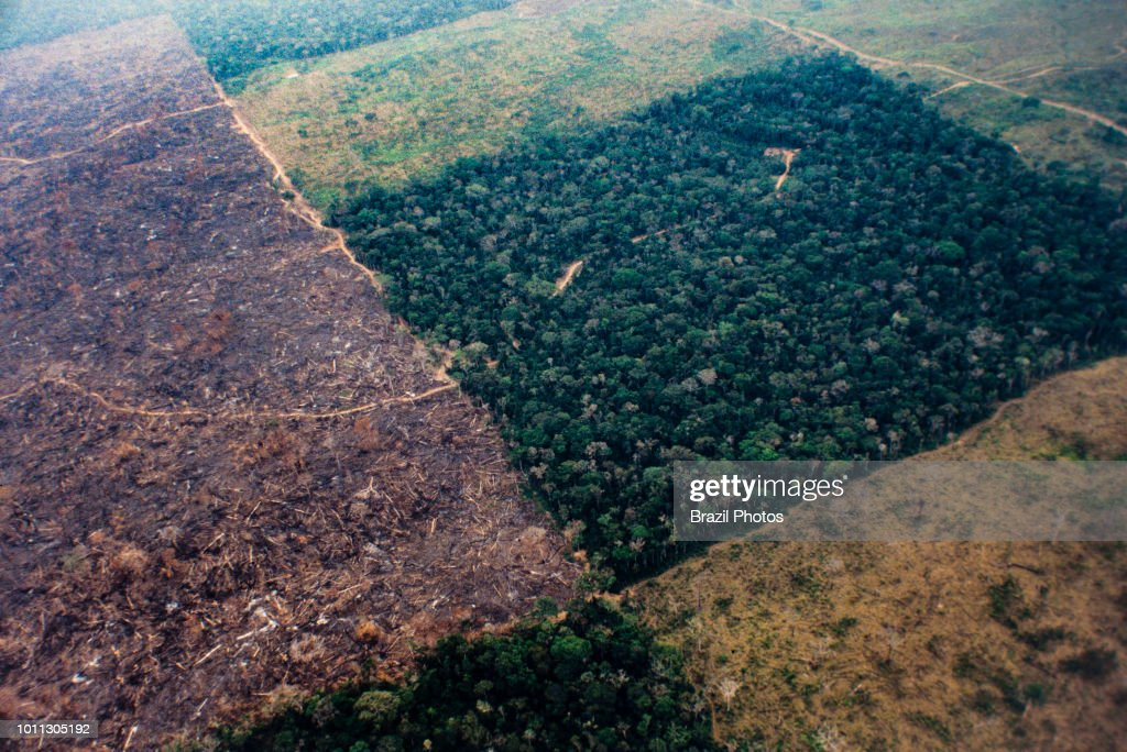 Aerial view of Amazon rainforest deforestation and farm... : News Photo