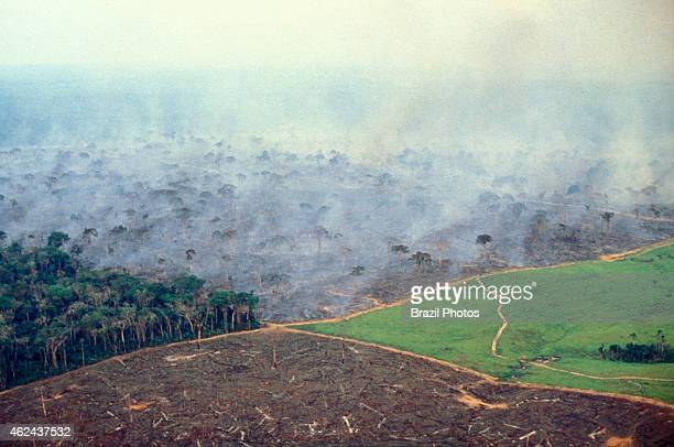 Aerial view of Amazon rainforest deforestation and farm management for livestock. Photo shows four stages in land management on a big cattle farm in...