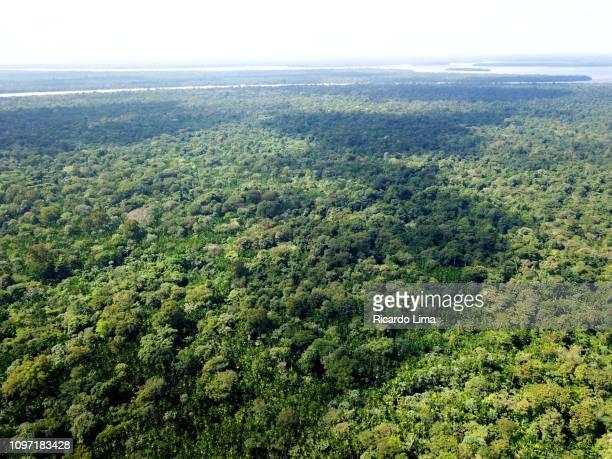 aerial view of amazon rainforest - río amazonas fotografías e imágenes de stock