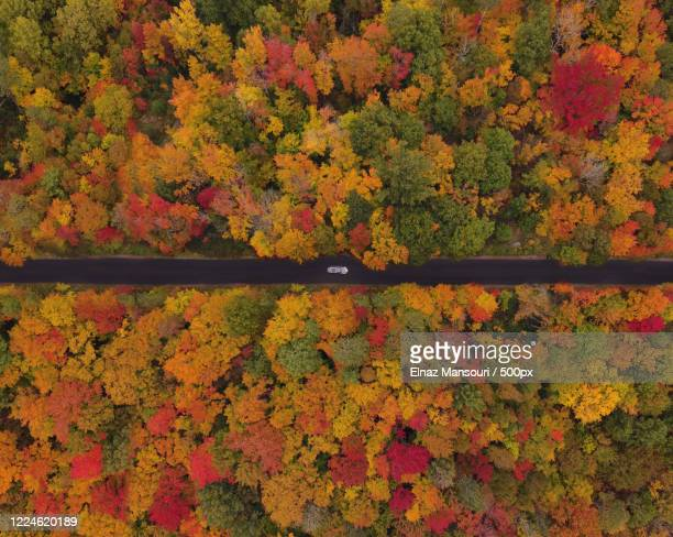 aerial view of autumn forest, gravenhurst, canada - ontario canada stock pictures, royalty-free photos & images
