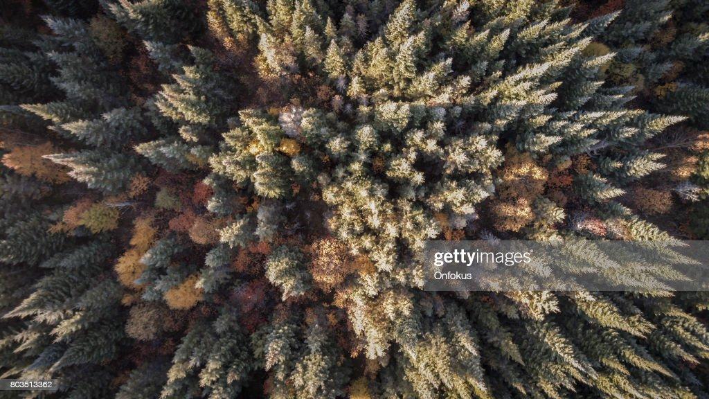 Luftaufnahme Von Herbst Wald Natur Quebec Kanada Stock Foto Getty